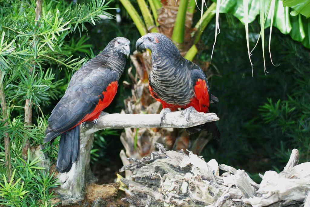Shows Vampire Parrots as part of Which Animal is Fake Animal Guessing Game