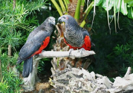 Shows Vampire Parrots as part of Which Animal is Real Animal Guessing Game